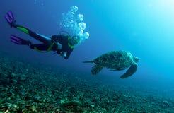 Schwimmende grüne Schildkröte Stockbild