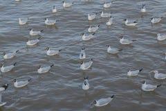 schwimmende Vögel Lizenzfreies Stockfoto