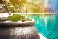 Schwimmenpoolbereich mit dekorativer asiatischer Artschüssel mit Seerose unter üppigem tropischem Garten mit Sonnenlicht- und Kop Lizenzfreies Stockfoto