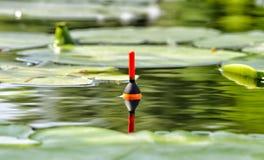 Schwimmer im See unter Seerose Lizenzfreie Stockfotos