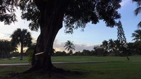 Schwingen auf einem Baum Schwingenbewegungen stock video footage