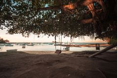 Schwingen in Kappe malheureux Strand, Mauritius lizenzfreies stockbild