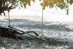 Schwingen Sie unter den Bäumen auf dem Strand in dem Meer lizenzfreies stockbild