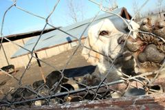 Schwytany Psi Zwierzęcy schronienie Obrazy Royalty Free
