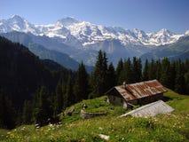 Schynige Platte, die Schweiz Stockbilder