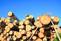 Scié vers le haut de l'arbre Photo libre de droits
