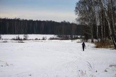 Sci di fondo della donna in foresta russa Immagine Stock