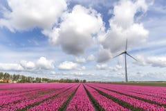 Sci olandese drammatico Fotografie Stock Libere da Diritti