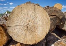 Scié outre du tronc d'arbre Photo stock