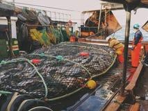 Sciabica con i salmoni Immagini Stock Libere da Diritti