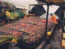 Sciabica con i salmoni Fotografia Stock