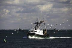 Sciabica e gabbiani di pesca della Nuova Inghilterra immagine stock