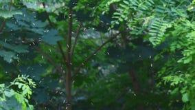 Sciame degli insetti nei raggi di sole del tramonto video d archivio
