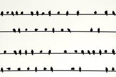 Sciame degli uccelli in una fila Immagine Stock Libera da Diritti