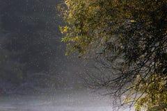 Sciame dei moscerini al tramonto in foresta Fotografia Stock Libera da Diritti