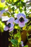 Sciame dell'insetto del fiore fotografia stock libera da diritti