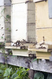 Sciame delle api e degli alveari Immagine Stock