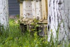 Sciame delle api e degli alveari Fotografia Stock