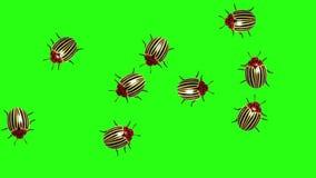 Sciame delle dorifore, CG animato sullo schermo verde, ciclo senza cuciture archivi video