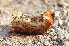 Sciame delle formiche su pane immagine stock libera da diritti