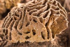 Sciame delle termiti fotografie stock libere da diritti