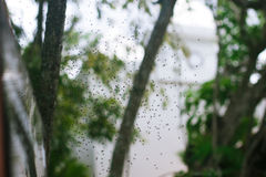 Sciame delle zanzare Fotografie Stock
