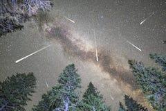 Sciame meteorico della Via Lattea della siluetta dei pini Immagini Stock