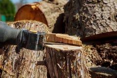Sciant par le gabarit électrique a vu, scie électrique de gabarit pour couper l'arbre Image libre de droits