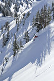 Sciatore negli alberi. Immagini Stock Libere da Diritti