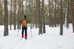 Sciatore remoto in foresta nevosa Fotografie Stock