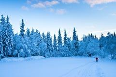 Sciatore solitario Fotografie Stock
