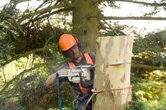 Scie passant par le tronçon d'arbre Photos libres de droits
