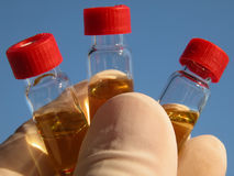 Science - 3 vials (1). Hand showing three vials containing a golden liquid Royalty Free Stock Photos