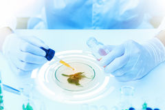Science, biology, ecology, research concept. Royalty Free Stock Photography