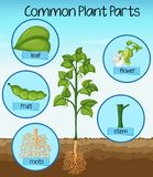 Science common plant parts stock illustration