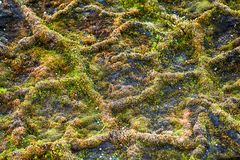 Science, ecology. Mosses - most Northern plants in world. Mesh vegetation, on fine-structure mesh polygonal substrate. Land France Joseph, arctic polygon stock photos