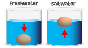 Science experiment for freshwater and saltwater Stock Photography