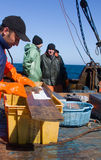 Science. Ichthyological studies in ocean. Flounder is measured with special ruler Stock Images