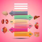Science infographics with arrows and human organs, pink background. Vector template Royalty Free Stock Image