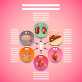 Science infographics with human organs in circles. Vector background Stock Photography