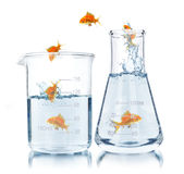 Science and medical glassware , Royalty Free Stock Images