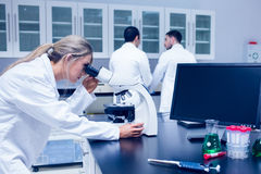 Science student working with microscope in the lab Royalty Free Stock Photo