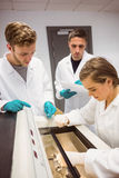 Science students using incubator in the lab Stock Photography
