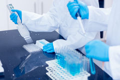 Science students using pipettes to fill test tubes Royalty Free Stock Image