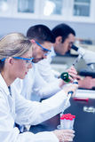 Science students working with chemicals in lab Royalty Free Stock Photo