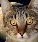 Sciencekattdjur med glödande ögon arkivfoton