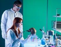 Scientics forense caucásico joven Imágenes de archivo libres de regalías