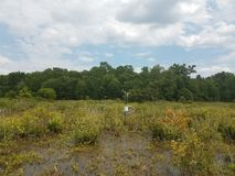 Scientific apparatus in a wetland. Scientific measuring apparatus in a swamp or wetland Stock Images