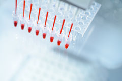 Scientific background on the topic of DNA analysis. Multichannel pipette and reaction plate. Space for your text Royalty Free Stock Images