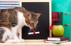 Scientific cat Stock Photos